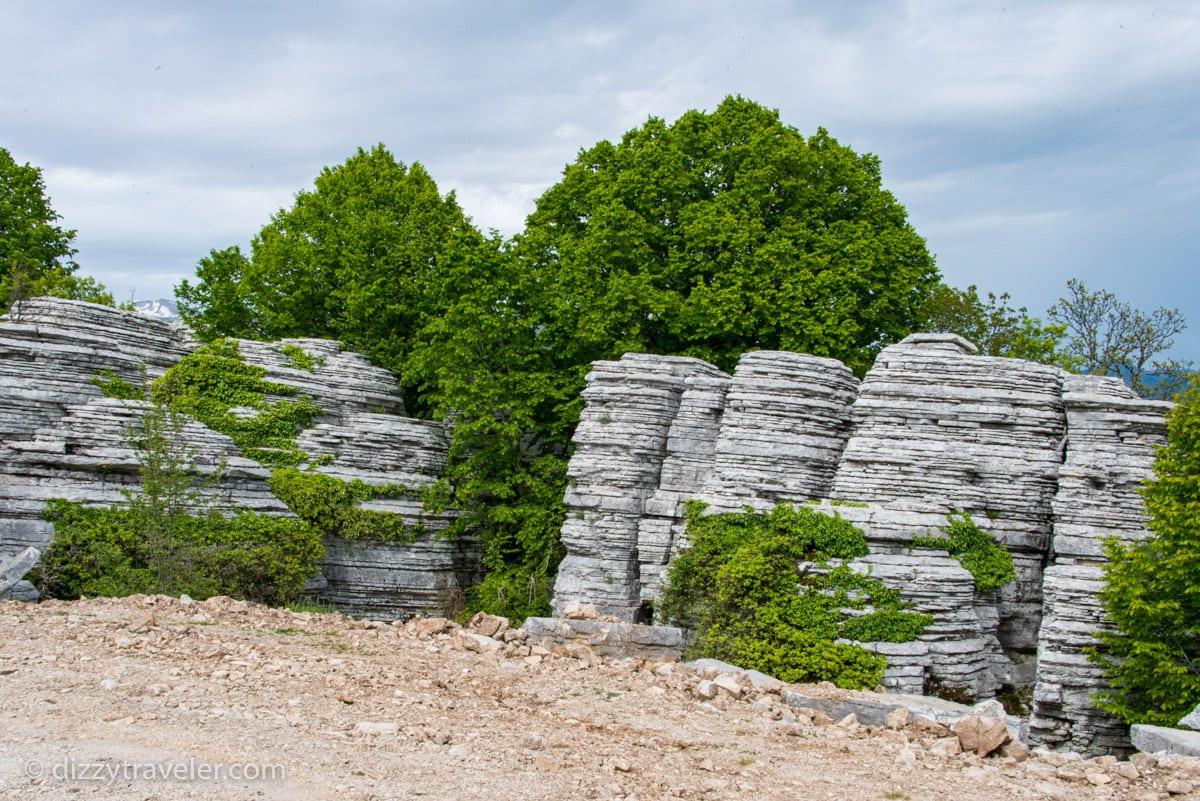 Stone-Forest-Monodendri